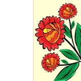 Fundo natural floral do botão vermelho grande Imagens de Stock Royalty Free