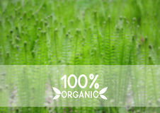 Fundo natural verde Imagens de Stock Royalty Free