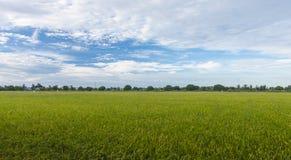 Fundo nebuloso da paisagem do céu azul de grama verde do campo do arroz Fotos de Stock
