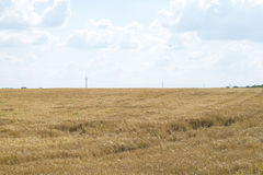 Fundo nebuloso do céu azul de campo de trigo Foto de Stock Royalty Free