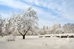 fundo nevado da beleza para seu projeto Imagens de Stock Royalty Free