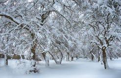 fundo nevado da beleza para seu projeto Foto de Stock