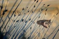 Fundo nostálgico com borboleta imagens de stock