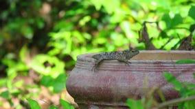 Fundo oriental da folha do verde do lagarto do jardim filme