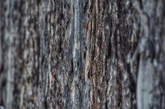 Fundo ou textura da casca do pinho imagem de stock