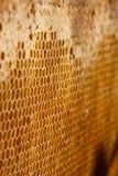 Fundo ou textura do pente do mel Fotografia de Stock