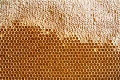 Fundo ou textura do pente do mel Foto de Stock Royalty Free