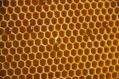 Fundo ou textura do pente do mel Fotos de Stock