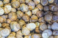fundo ou textura Os caracóis enchidos Alimento francês produtos delicacy Um prato para gourmet mercado imagem de stock