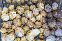 fundo ou textura Os caracóis enchidos Alimento francês produtos delicacy Um prato para gourmet mercado imagens de stock royalty free