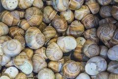 fundo ou textura Os caracóis enchidos Alimento francês produtos delicacy Um prato para gourmet mercado imagens de stock