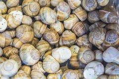 fundo ou textura Os caracóis enchidos Alimento francês produtos delicacy Um prato para gourmet mercado fotografia de stock royalty free