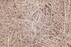 Fundo ou textura seca da palha imagem de stock