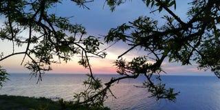 Fundo A paisagem do mar em vermelho, no rosa, em cores azuis, roxas através dos ramos das árvores e em arbustos fotos de stock