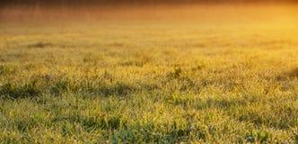 Fundo panorâmico da mola do nascer do sol com espaço da cópia imagem de stock royalty free