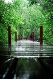 Fundo, papel de parede, Tungprongthong, floresta dos manguezais situada no rayong Tailândia, céu da nuvem Foto de Stock Royalty Free