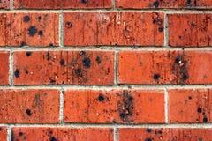 Fundo - parede de tijolo vermelho com vitrificação preta Imagens de Stock Royalty Free