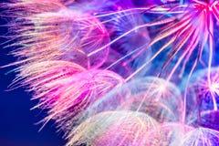 Fundo pastel cor-de-rosa colorido - flowe abstrato vívido do dente-de-leão Fotos de Stock Royalty Free