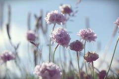 Fundo pastel lilás roxo da flor selvagem feito com filtros de cor fotografia de stock royalty free
