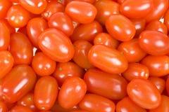Fundo pequeno dos tomates Foto de Stock Royalty Free