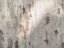 Fundo pintado branco riscado velho das placas de madeira Imagens de Stock Royalty Free