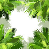 Fundo pintado de folhas de palmeira verdes nos cantos Fotos de Stock