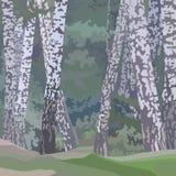Fundo pintado desenhos animados de uma floresta do vidoeiro Imagem de Stock
