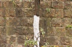 Fundo pintado isolado da parede da árvore e de tijolo imagens de stock royalty free
