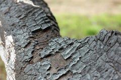 Fundo preto do grunge Textura e detalhes de madeira queimados Forest Fire imagem de stock