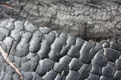 Fundo preto do grunge Textura e detalhes de madeira queimados Forest Fire fotografia de stock royalty free