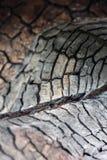 Fundo preto do grunge Textura e detalhes de madeira queimados Forest Fire imagens de stock royalty free