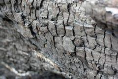 Fundo preto do grunge Textura e detalhes de madeira queimados Forest Fire fotos de stock
