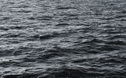 Fundo preto e branco da água Fotografia de Stock Royalty Free