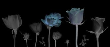 Fundo preto isolado flor foto de stock royalty free