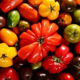 Fundo quadrado de tomates maduros frescos sortidos Fotos de Stock Royalty Free