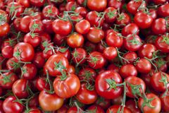 Fundo qualitativo dos tomates Tomates frescos Tomates vermelhos Tomates orgânicos do mercado da vila Fotografia de Stock Royalty Free
