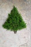 Fundo rústico da árvore de Natal do cedro Fotos de Stock