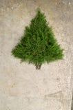 Fundo rústico da árvore de Natal do cedro Fotografia de Stock Royalty Free