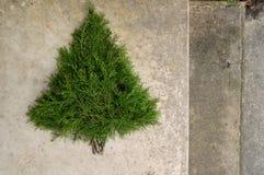 Fundo rústico da árvore de Natal do cedro Fotos de Stock Royalty Free