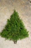 Fundo rústico da árvore de Natal do cedro Fotografia de Stock