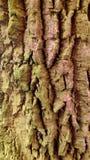 Fundo rachado áspero da textura da árvore de folhosa do detalhe Foto de Stock