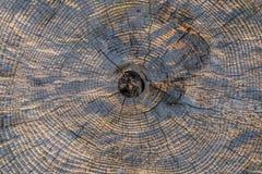 Fundo resistido velho da textura do transect do tronco de árvore Imagens de Stock