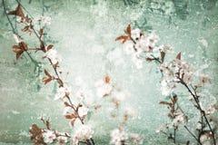 Fundo riscado floral fotografia de stock royalty free