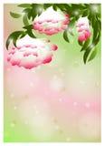 Fundo romântico da flor ilustração stock