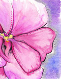 Fundo romântico do amor da flor abstrata carmesim cor-de-rosa da aquarela Fotografia de Stock