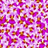 Fundo roxo de Vanda Miss Joaquim Orchid Seamless Flor do nacional de Singapura Ilustração do vetor ilustração stock