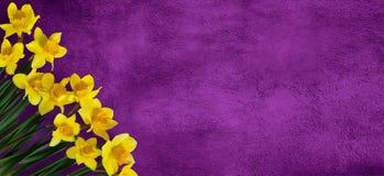 Fundo roxo do tela panorâmico com flores Foto de Stock Royalty Free