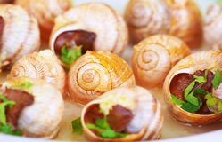 Fundo saboroso do escargot Fotografia de Stock