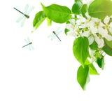 Fundo saudável da mola com folhas verdes, flores da mola Fotos de Stock