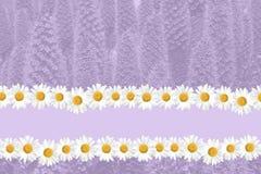 Fundo sazonal da margarida e da grama do verão Imagem de Stock